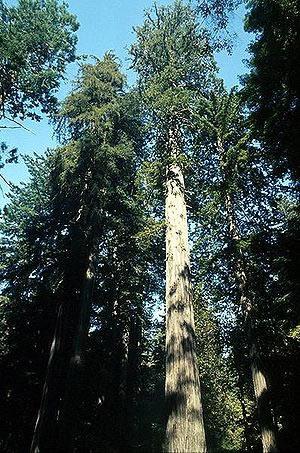 trægulve og træ